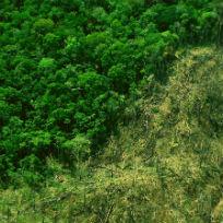Desmatamendo ilegal no Pará / Foto: Ana Cotta