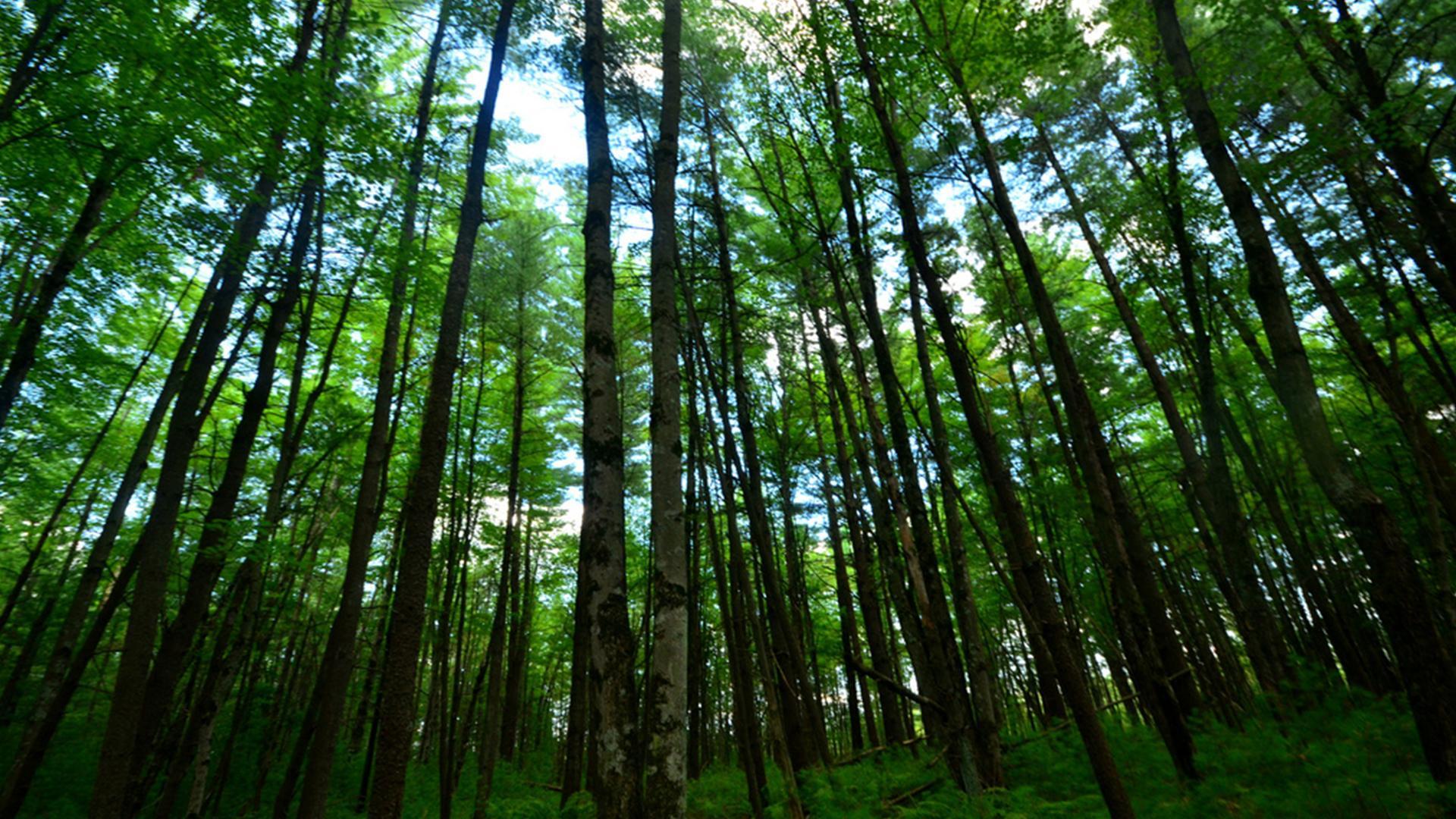 Restauração de paisagens, oportunidade trazida pela economia de baixo carbono / Foto: Domínio Público