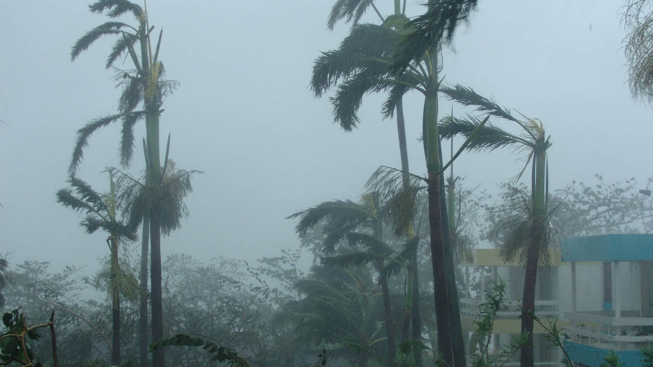 Palmeiras balançando devido a uma tempestade