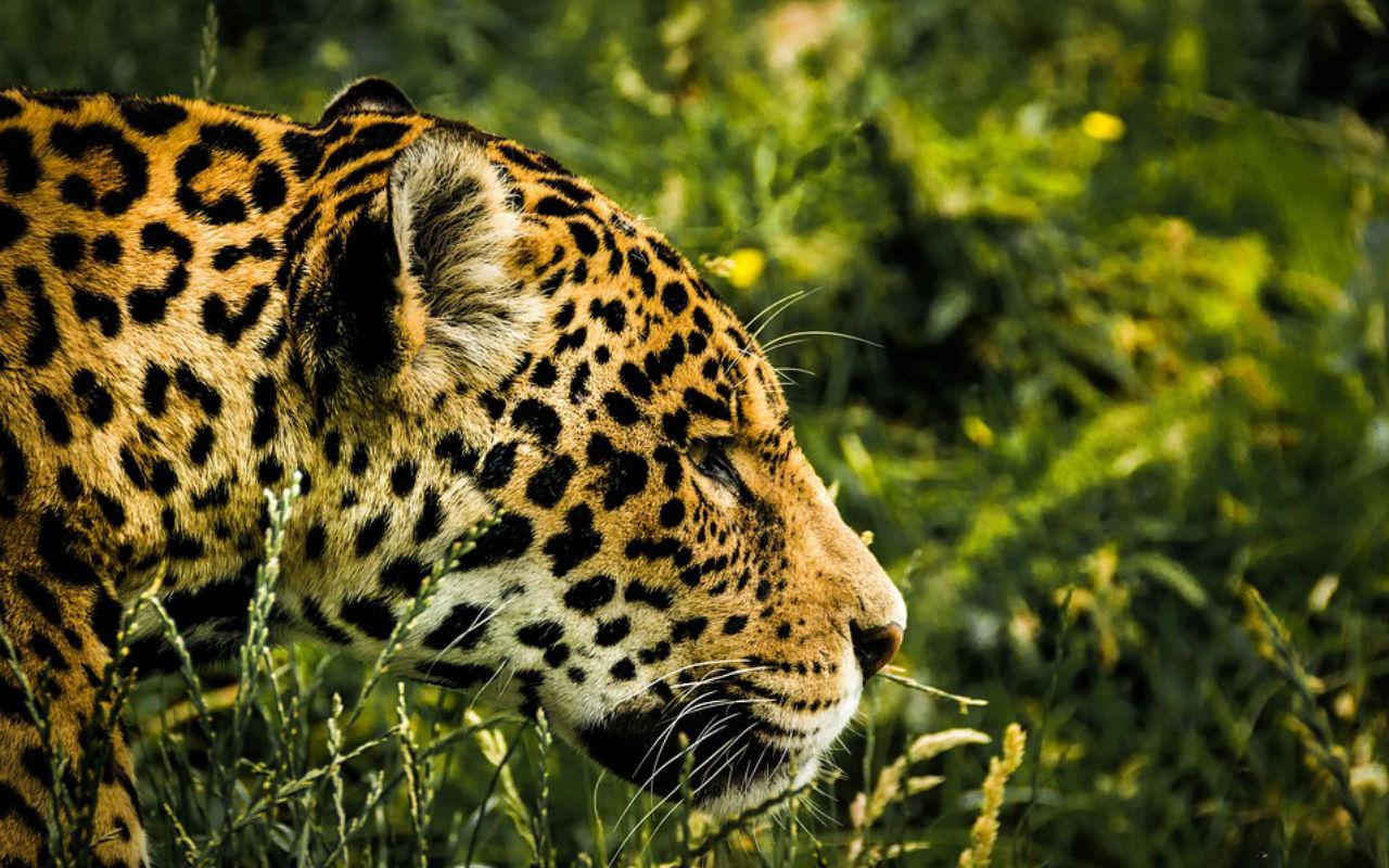 mudanças climáticas e a biodiversidade brasileira museu do amanhã