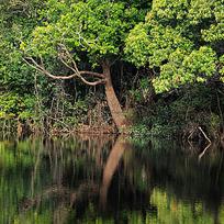 Árvores à beira do rio