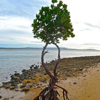 Uma única árvore com mar ao fundo