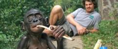 Pesquisador Brian Hare com filhote de bonobo