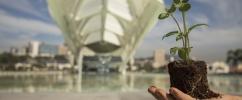 Uma mão segurando uma muda de planta com o Museu do Amanhã ao fundo