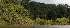 Floresta densa